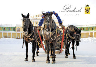 Зимний Санкт-Петербург. Катания на санях. Тройка